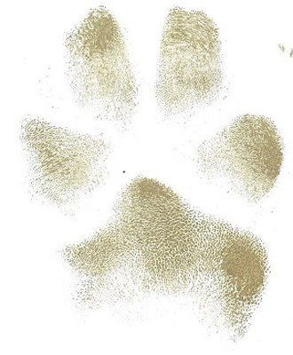 Tates pawprint cropped