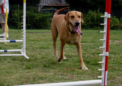 agility my name is tate